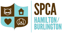 2019 Cupcake Day Hamilton Burlington Humane Society