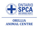 2019 Cupcake Day Ontario SPCA Orillia Animal Centre