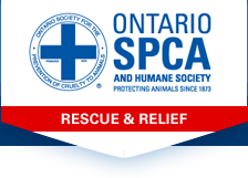 Ontario SPCA and Humane Society | Rescue & Relief