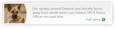 Our spokes-animal General was literally hours away from death when our Ontario SPCA Peace Officer rescued him. Click for the full story >>