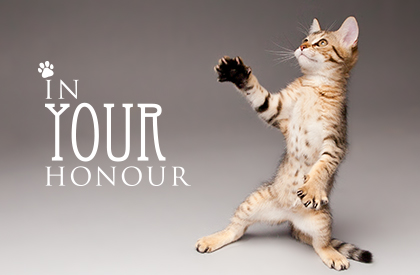 In Your Honour Cat