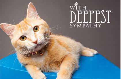 With Deepest Sympathy Cat