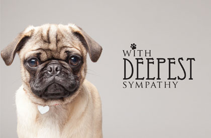 With Deepest Sympathy Dog