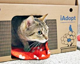 Cat Adoption, Newshound