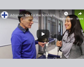Adoption tips with Dave Wilson