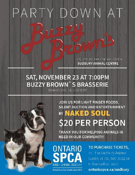 Party Down at Buzzy Browns Sudbury 2019