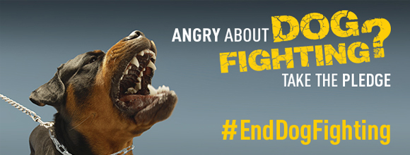 Take the Pledge to end Dog Fighting Banner