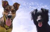 Dogs under Blue Sky