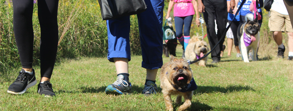 dogs walking at the Friends for Life Walk