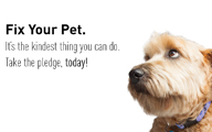 FYP Newshound Ad