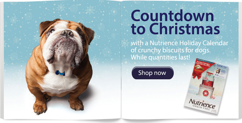 Shop for your Dog Advent Calendar Today!