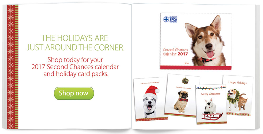 Second chances cards and calendars for your friends and family