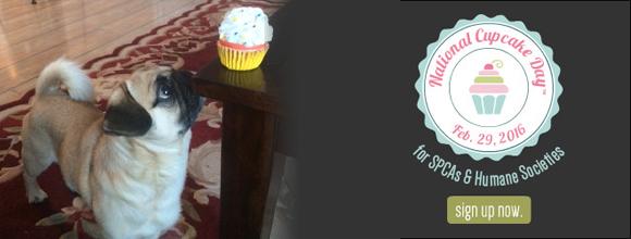 Cupcake Day Freddie