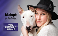 Iadopt for the Holidays Newshound Ad