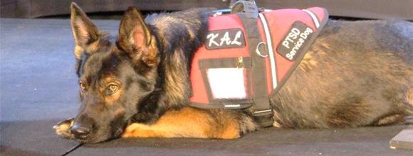 Kal the service dog