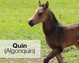 Name the Foal winner