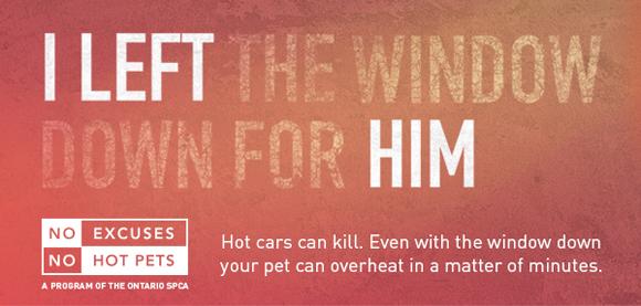 No Hot pets banner