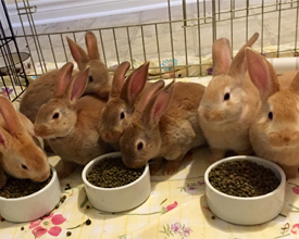 Orangeville_Bunnies_May.jpg