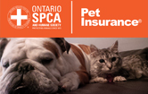 Pet Insuance Image