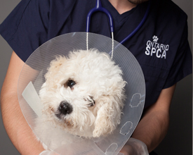 Prov-SHP-dog-cone.jpg