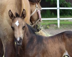 Prov-foal-small.jpg