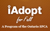 adopt-aug