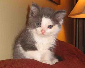 Maggie the kitten