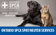 Spay Neuter Services